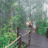 Kuranda Rainforest Boardwalk