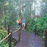 Kuranda-Skyrail-Boardwalk-Rainforest
